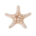 اكسسوار مشبك الشعر - نجمة البحر